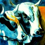 D233 koeien 32