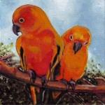 D411 vogels