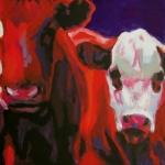 D234 koeien 33