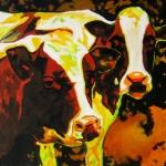 D235 koeien 34