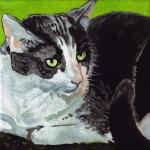 D414 kat