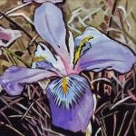 N272 wilde iris