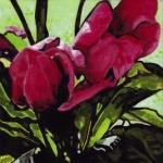 N274 tulpen