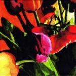 N217 tulpen13