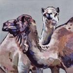 D420 kamelen
