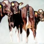 D303 koeien 41