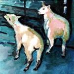 D302 schapen 9