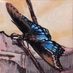 D421 vlinder
