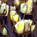 N224 tulpen 15