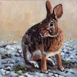D433 wild konijn