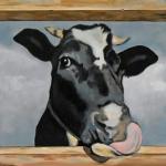 D437 koeien
