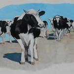 D440 koeien