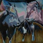 D333 koeien 43