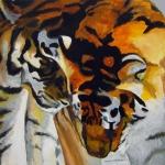 D335 tijgers