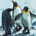 D352 pinguins