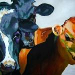 D330 koeien