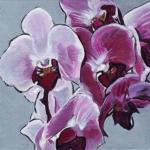 N278 orchidee