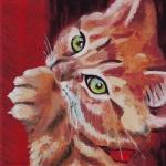 D357 kitten