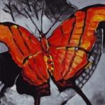 D365 vlinder