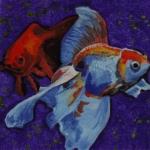 D367 vissen