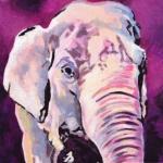 D370 olifant