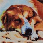 D371 slapende hond