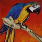 D382 papegaai