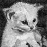 T40 kitten