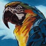 D454 Macaw