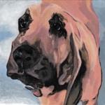 D459 hond