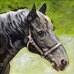 D464 paard
