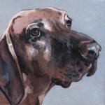 D465 hond