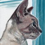 D475 kat