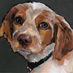 D477 hond