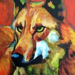 D162 wolf