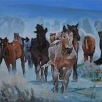 D480 paarden