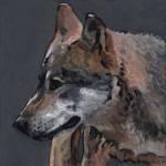 D489 wolf