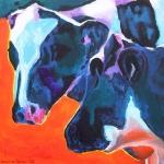 D166 koeien 17