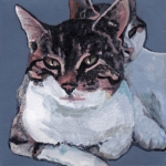 D494 katten