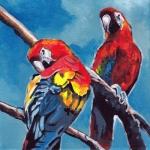 D495 papegaaien