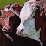 D502 koeien