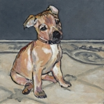 D504 puppy
