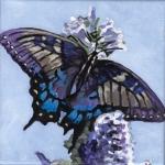 D505 vlinder