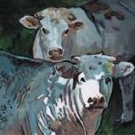 D513 koeien