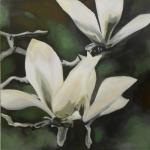 N246 magnolia