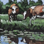 D522 koeien