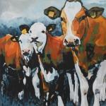 D523 koeien