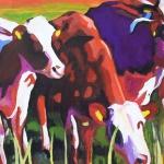 D175 koeien 19