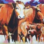 D197 koeien 26