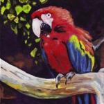 D399 papegaai